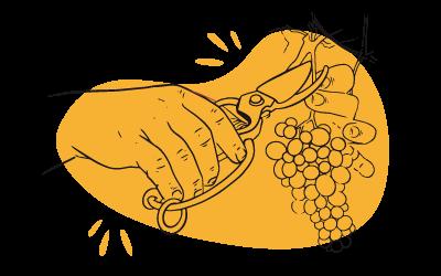 El viticultor